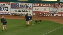 Must See: Goat wanders onto baseball field, delays game