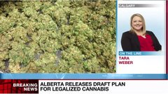 Alberta releases draft plan for legalized cannabis