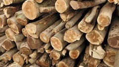 Ontario appoints Jim Peterson as new point man on softwood talks