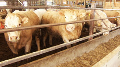 Stronger beef prices heading into the summer