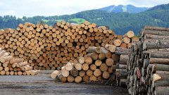 A sectoral deal a better option in softwood lumber dispute: C.D. Howe