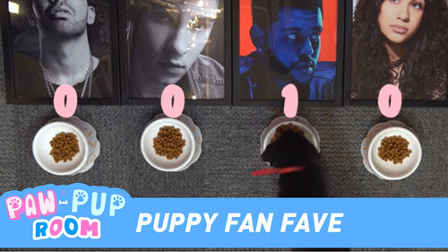 Puppy Fan Fave at the 2017 iHeartRadio MMVAs