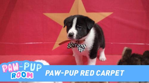 Paw-Pup Red Carpet