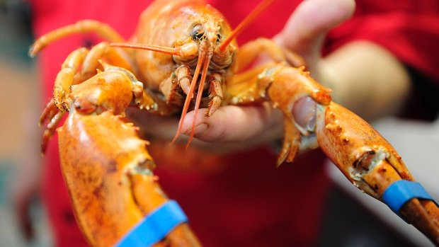 'Cockroach of the sea' no longer: US$30 lobster rolls become a reality