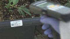 Every plant gets a barcode: Ample Organics tracks cannabis using 'seed-to-sale' software