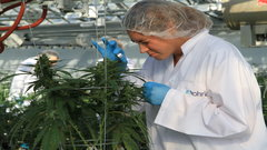 Some cannabis sector jobs can pay over $100,000 per year