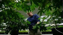 Canopy Growth signs marijuana supply deal with Newfoundland