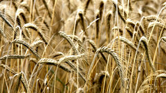 Wheat prices could be toast: Linn & Associates