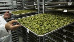 Cannabis craze fueling US$8B worth of deals