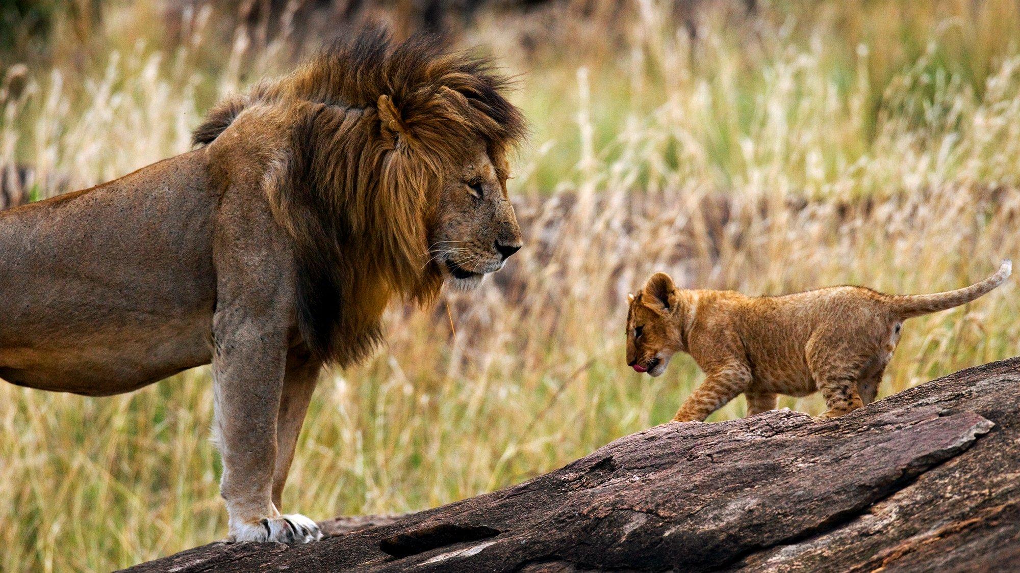 Ultimate Animal Dads