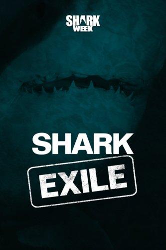 Shark Exile