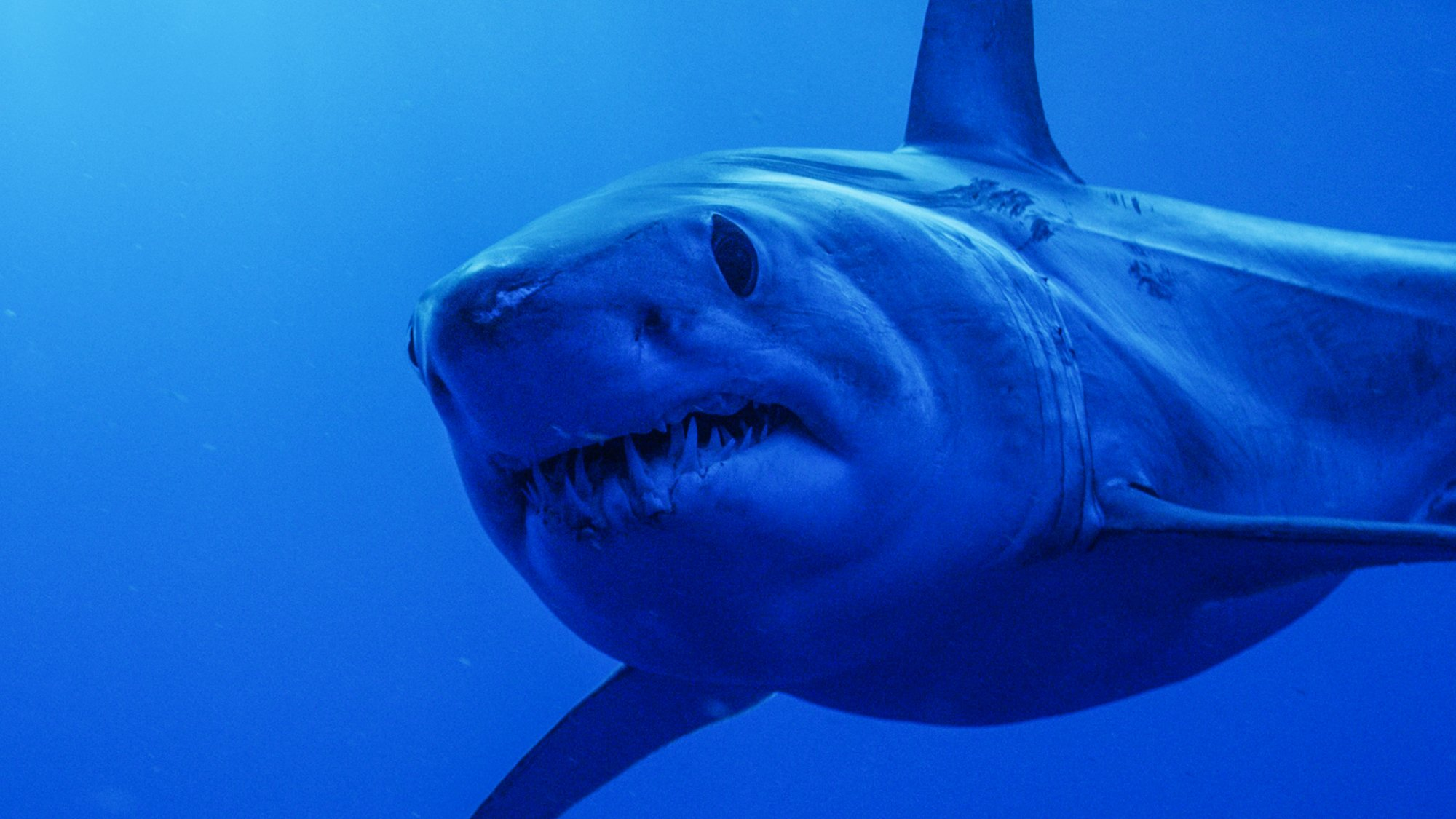 Sharkmania