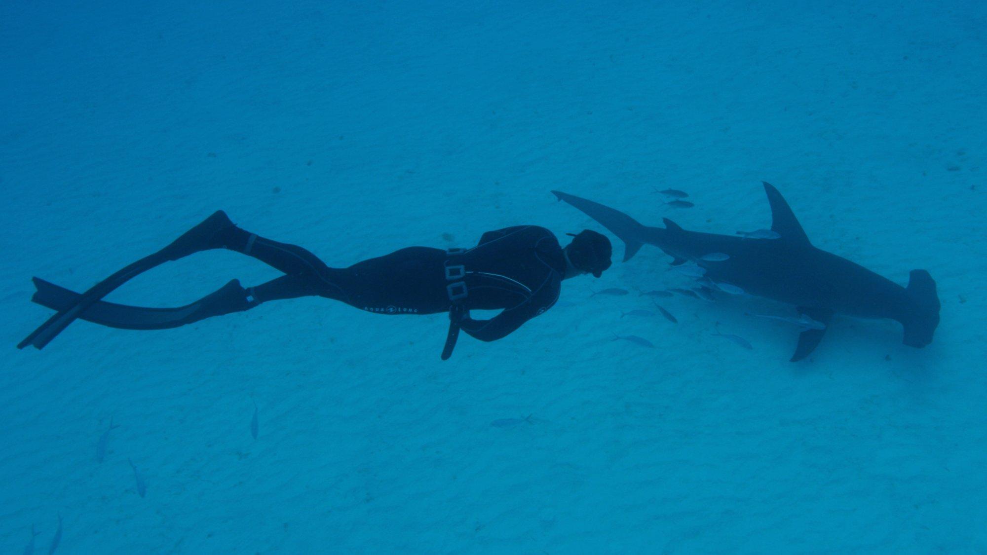 Shark School With Michael Phelps