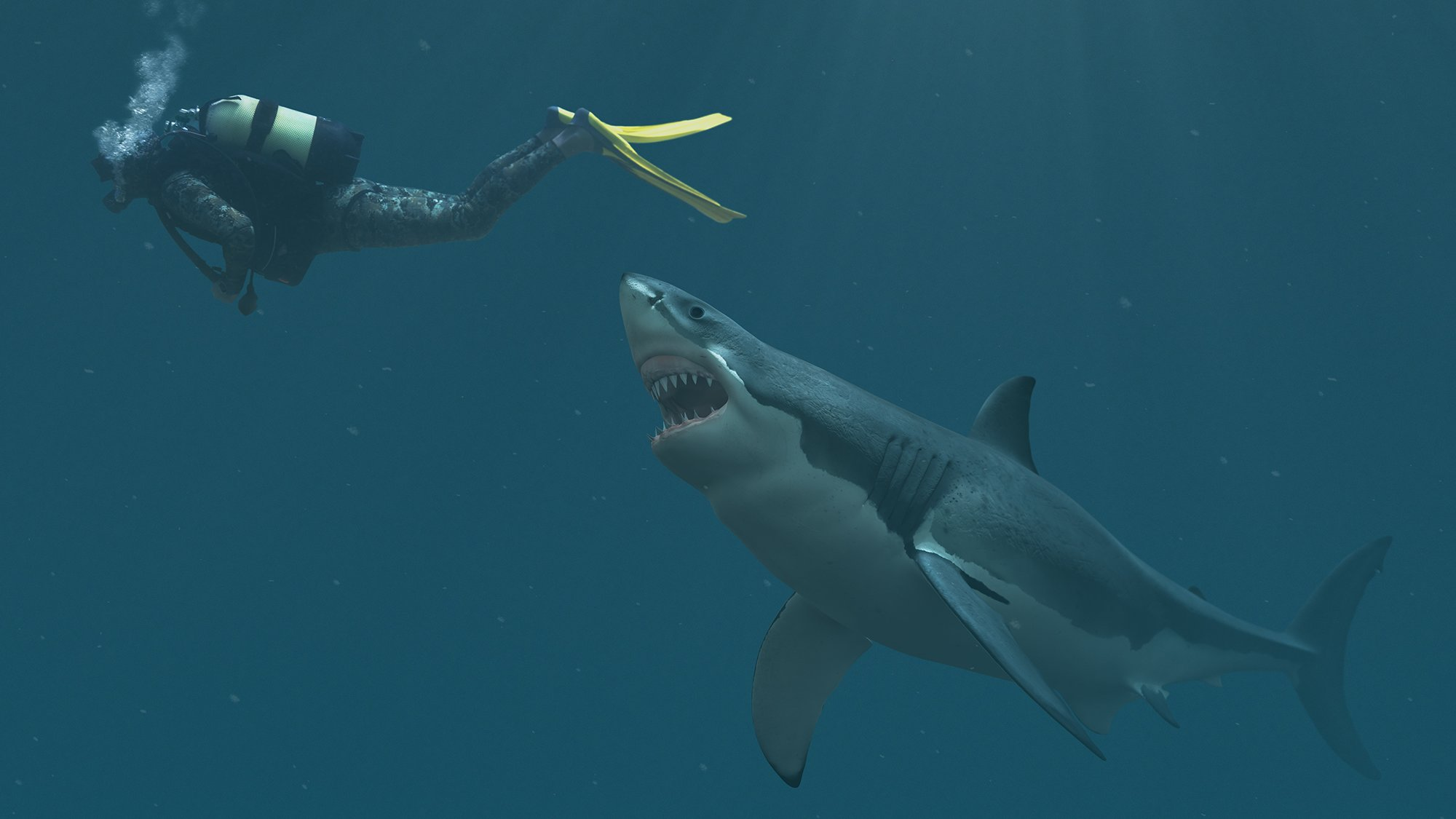 Shark Attack: Survival Guide