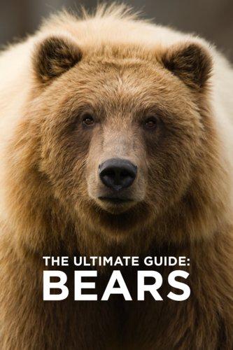 Ultimate Guide: Bears
