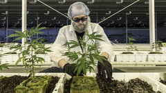 Aurora targets Mexico in new pot deal