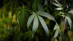 New marijuana ETF lists on NEO Exchange