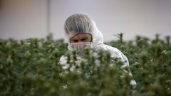 Hype over pot stocks reminiscent of buildup to tech bubble of the '90s: Zechner