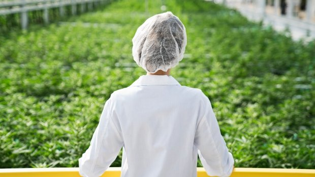 Aphria CEO: Latin America deals 'first domino' to better bottom line