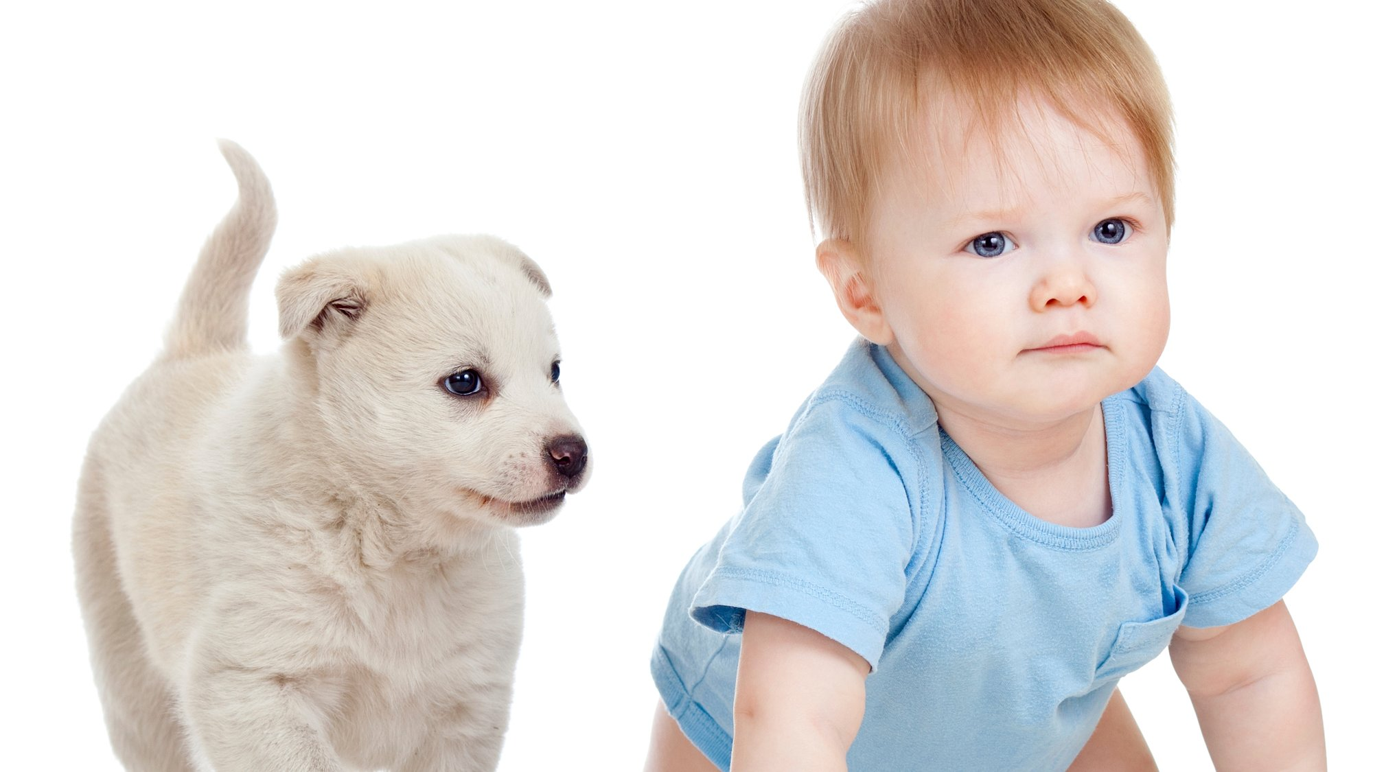 Puppies vs. Babies