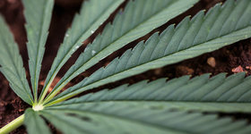 AB InBev, Pepsi, Coca-Cola all likely eyeing cannabis