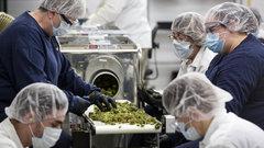 Cannabis CEOs' optimism, hyperbole could backfire: PR expert