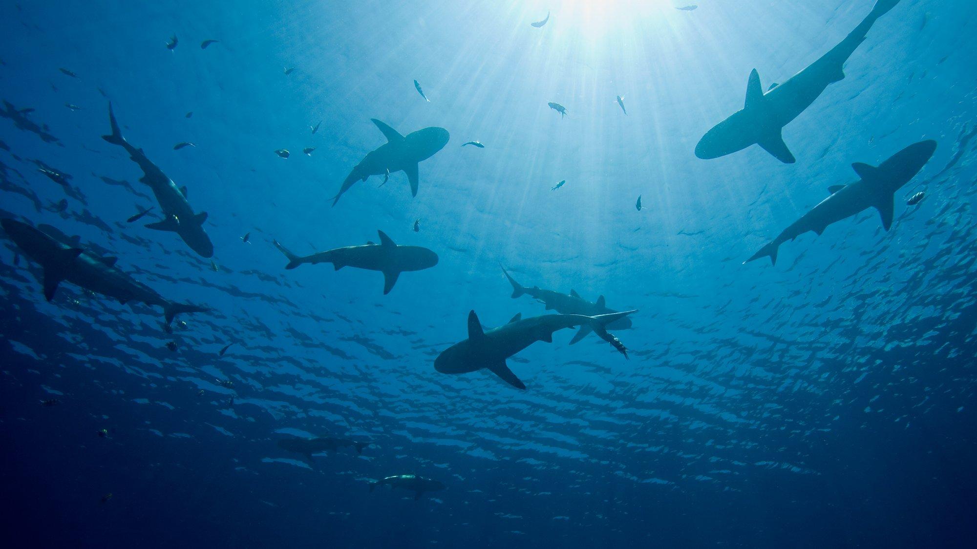 Nuclear Sharks