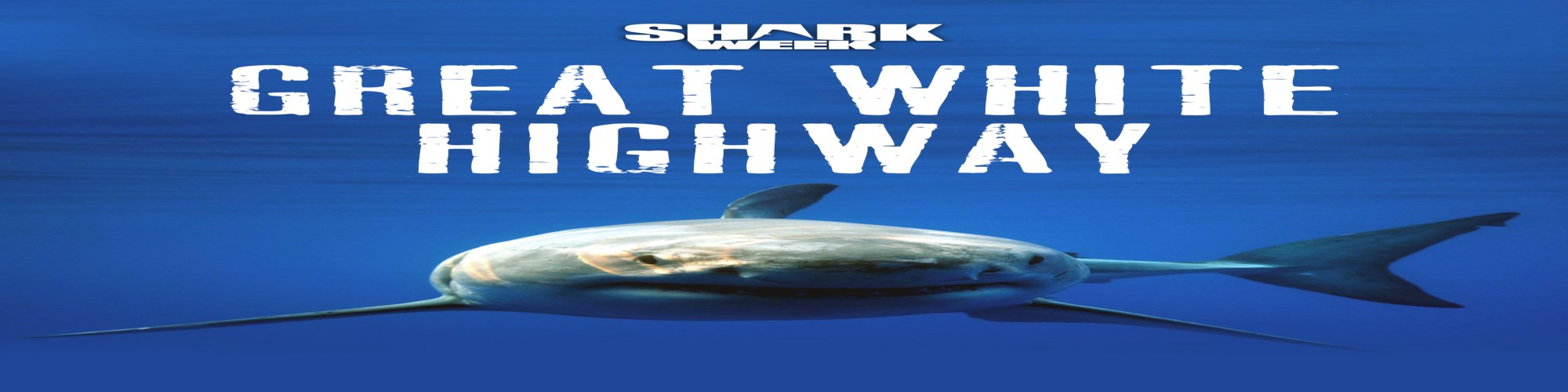 Great White Highway