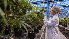 Hexo shares under pressure after unlicensed pot disclosure