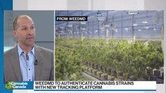 Cannabis supply issues will continue for 24 to 36 months: WeedMD CEO