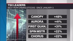 Pot stocks lead TSX winning streak