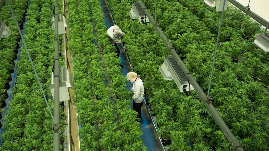 Canopy to buy Acreage in US$3 4B deal, gaining major U S