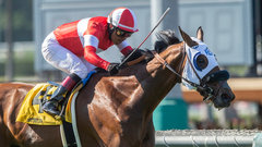 Stronach-owned horse track under scrutiny as fatalities rise