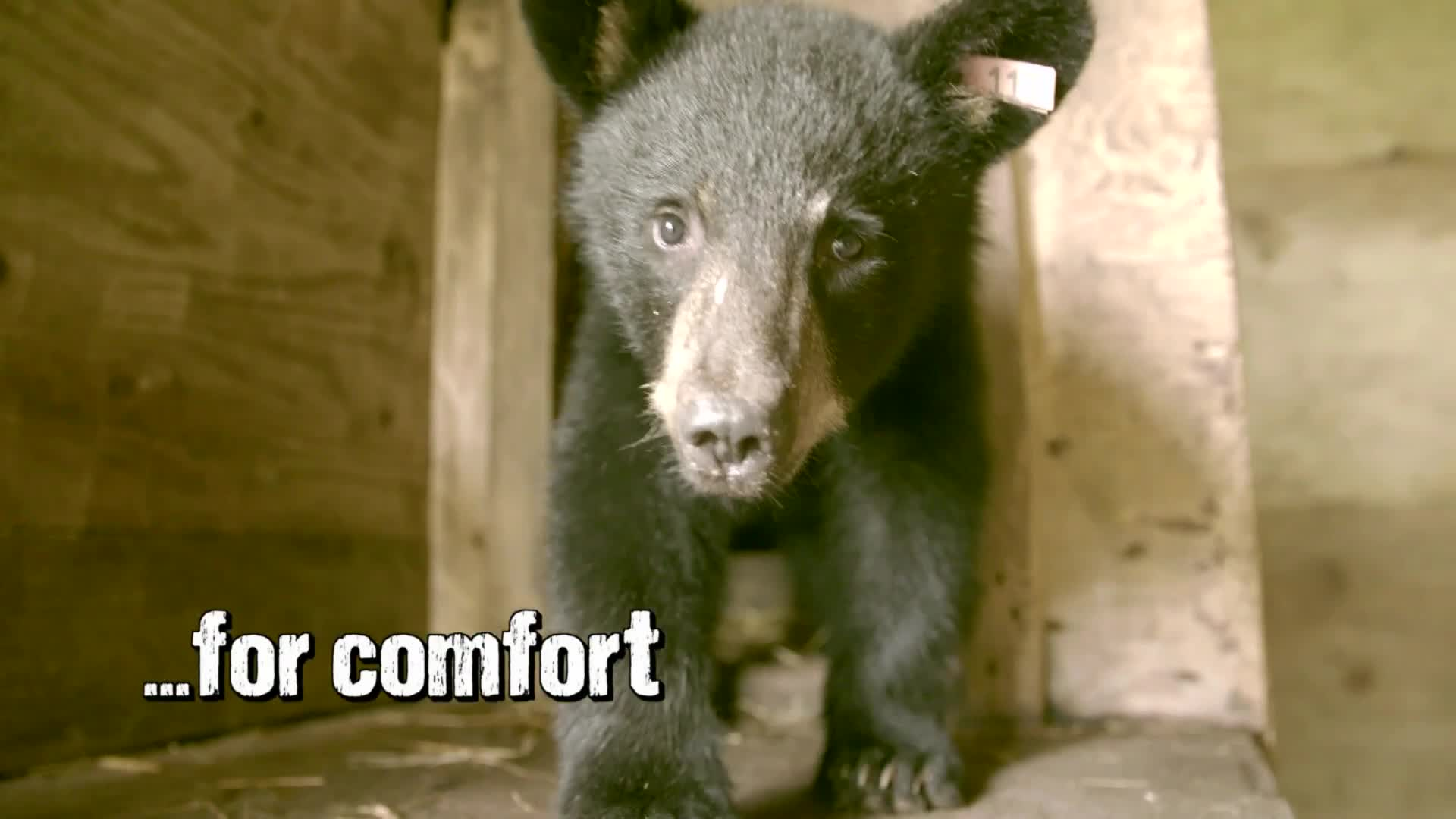 Wild Bear Rescue | Animal Planet | Discovery