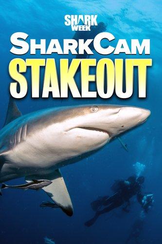 SharkCam Stakeout