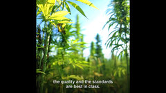 Why brand quality will be paramount in the cannabis industry