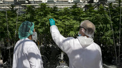 CannTrust whistleblower says he had mixed feelings about licence suspension