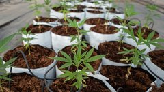 Aphria expected to report strong recreational cannabis sales growth in Q1