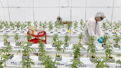 Tilray expects to be profitable next quarter amid mixed results in Q3