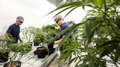 Canopy Growth's beverage boss to exit; 220 staff laid off