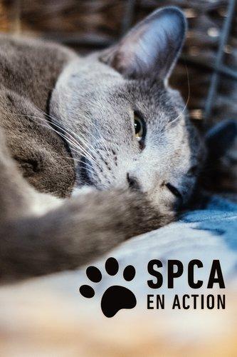 SPCA en action