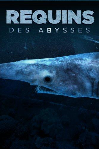 Requins des Abysses