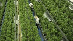 Canopy Growth reprices Acreage Holdings deal amid 'challenging' conditions