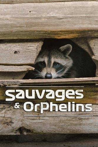 Sauvages et orphelins