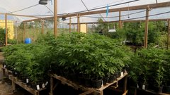 Wrigley Heir latest to tap SPAC frenzy to take U.S. pot firm public